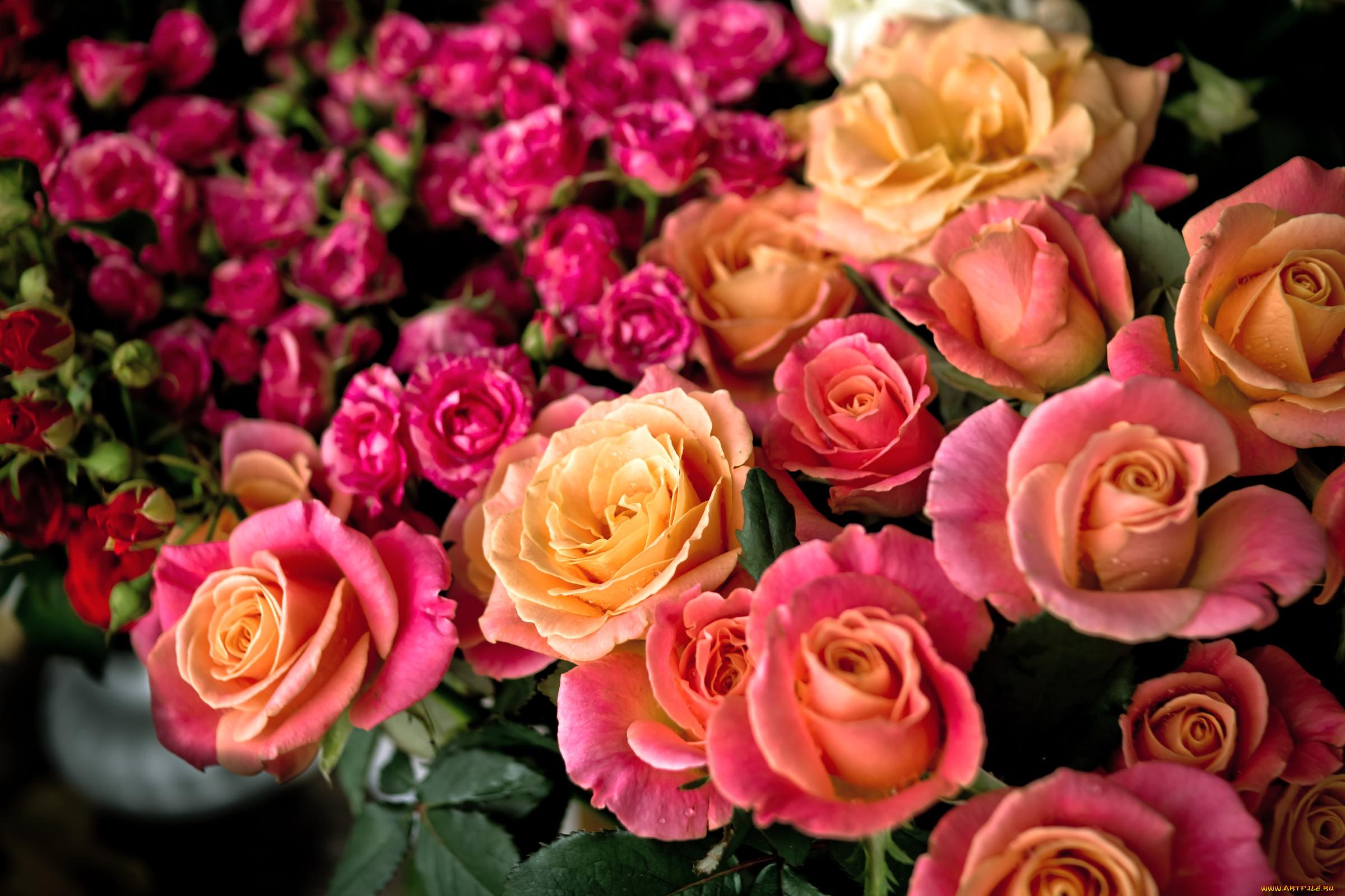 картинки где много розы кожа воды